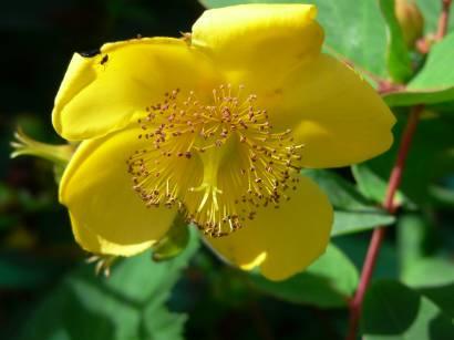 natur-blumen-bilder-blume-fotos-gelbe-blüte