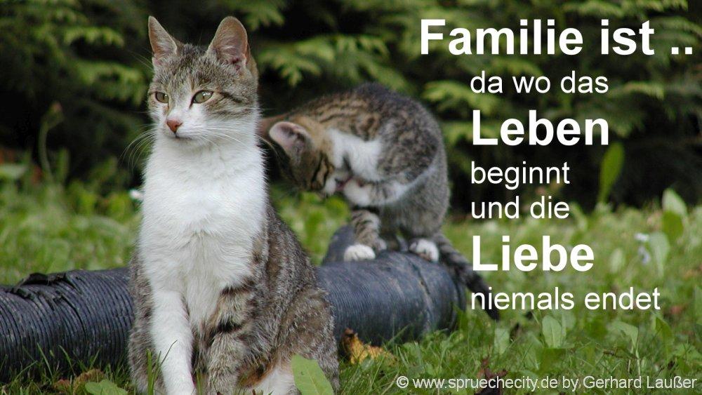 sprüchebilder-familie-leben-liebe-wahre-worte-weisheiten-katzen-1000